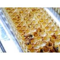[100g 試吃罐] 三日鮮採蜂王乳~含冷凍運費 預購5-7日內出貨