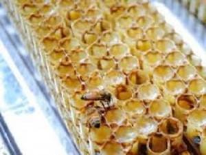 [台灣限定] 三日鮮採蜂王乳~含冷凍運費 預購5-7日內出貨